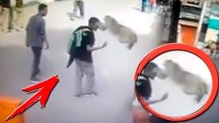 ТОП 10 НАПАДЕНИЙ ОБЕЗЬЯН НА ЛЮДЕЙ / Amazing Monkeys Attacks Humans
