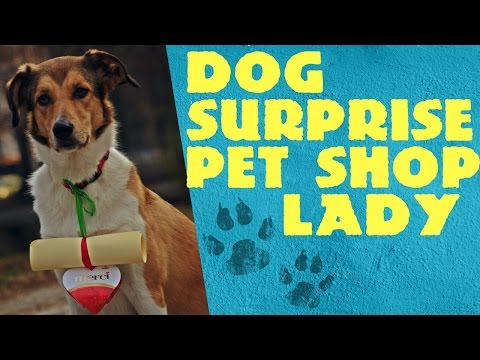 Dog surprise pet shop lady /thank you prank – Be good