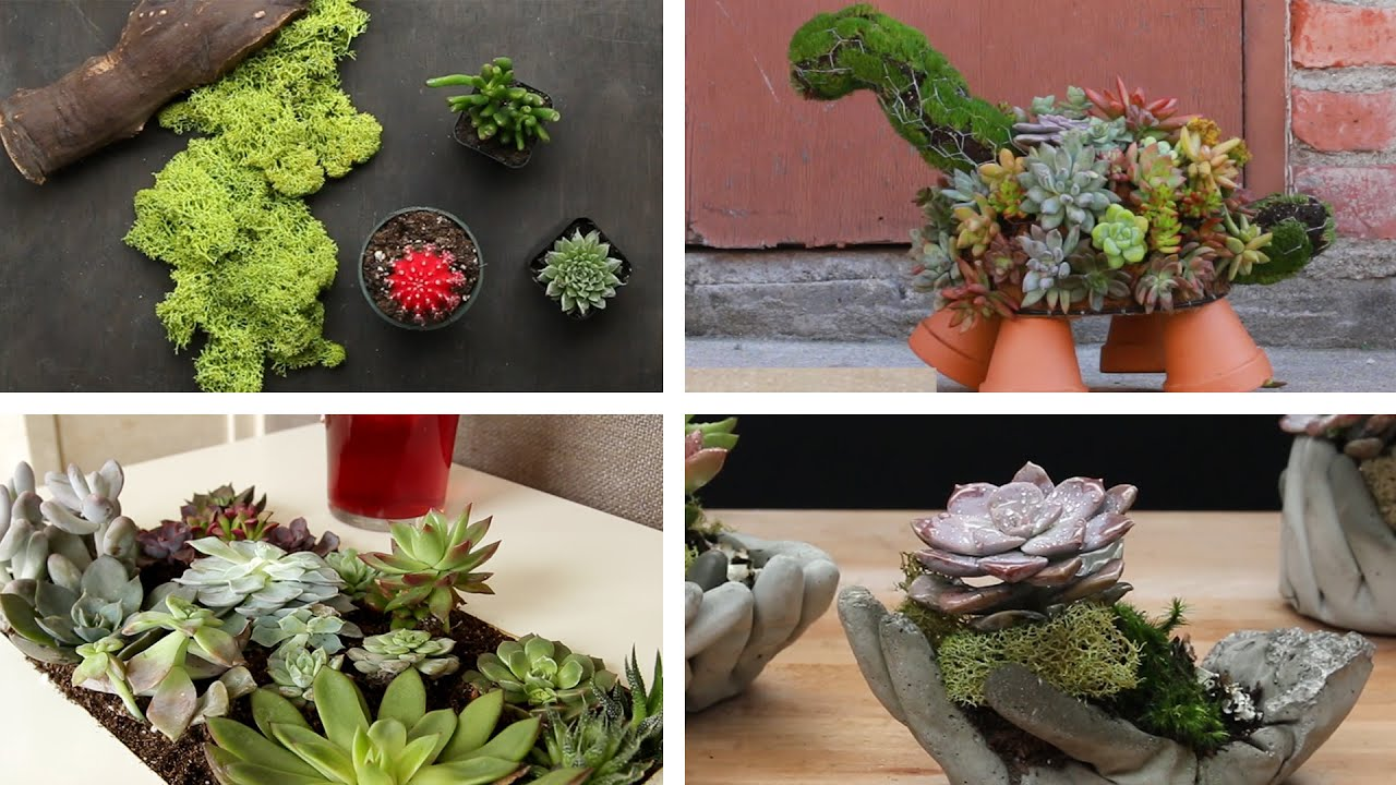6 Beautiful Ways To Plant Succulents Doovi