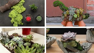 6 Beautiful Ways To Plant Succulents
