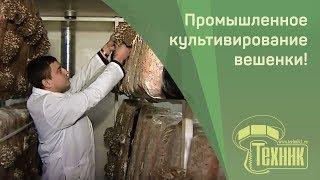 Грибная ферма в Красноярском крае