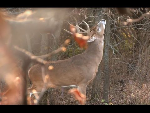 The Truth On Hunting Scrapes and Rubs | Muddy Whitetail Watch (EP 8)
