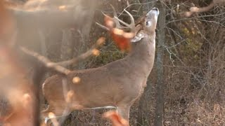 Video The Truth On Hunting Scrapes and Rubs | Muddy Whitetail Watch (EP 8) download MP3, 3GP, MP4, WEBM, AVI, FLV Agustus 2018