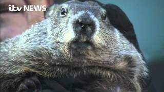 Groundhog Day: Punxsutawney Phil predicts an early spring