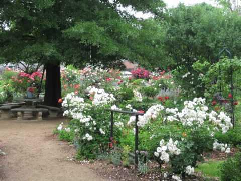 McGill Rose Garden Charlotte, NC