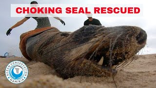 Choking Seal Rescued