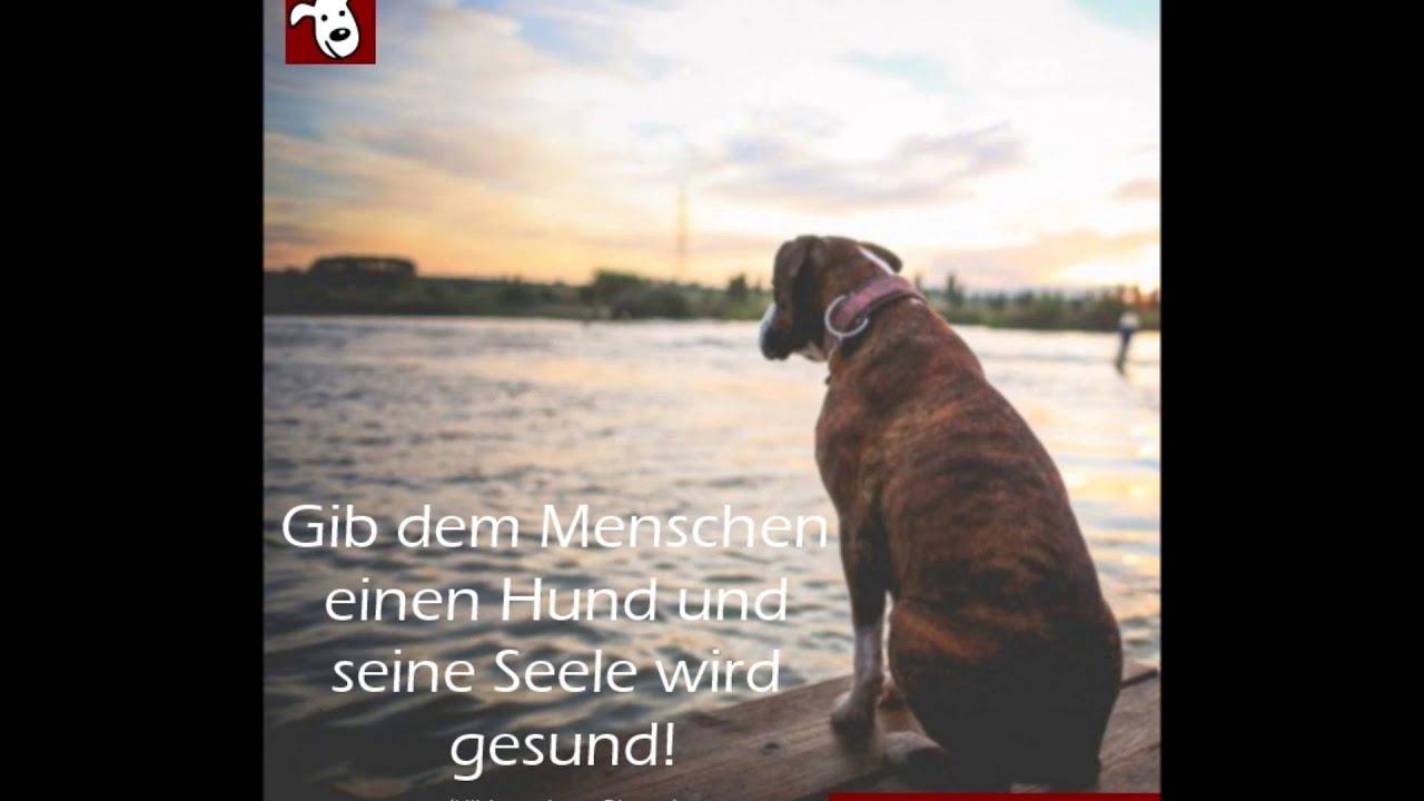 Sprüche Über Hunde Zum Nachdenken