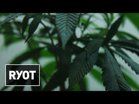 The Future of Medical Marijuana: Charlotte's Web