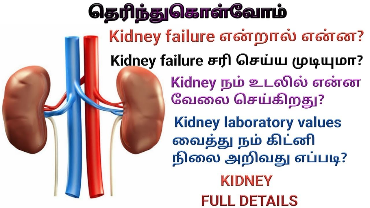 Kidney Failure Symptoms In Tamil Part 1 By Dayana Gnanadhas
