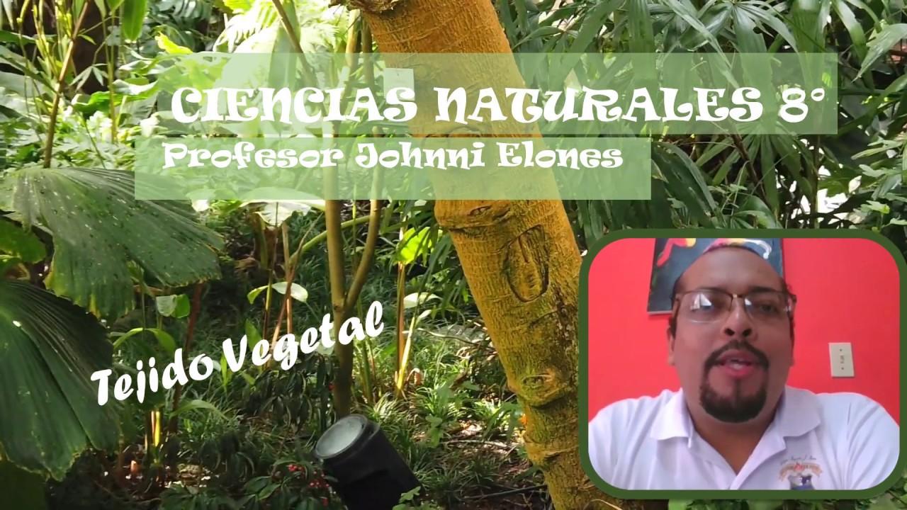 CIENCIAS NATURALES 8° Tejidos Vegetales