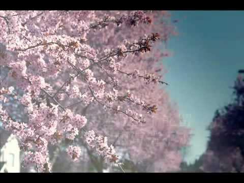 花開花落,緣起緣滅 - YouTube