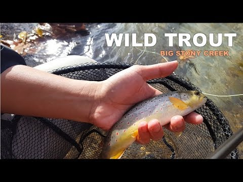 Catching WILD TROUT in Clear Water - Big Stony Creek, VA