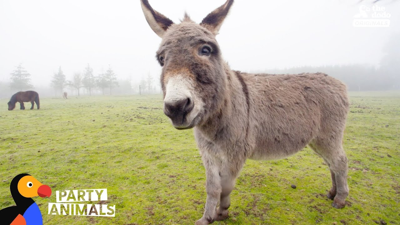 Donkey and Woman Who Both Lost Children Celebrate Their Emotional Journey Party Animals