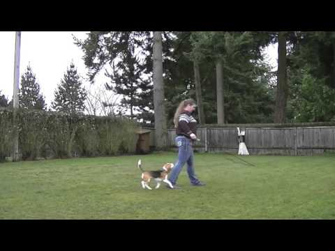 Flirt Pole for Exercise and Fun with Dogs