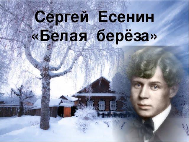 Изображение предпросмотра прочтения – ВероникаБурдяева читает произведение «Берёза» С.А.Есенина