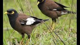 Bird in the kobutor bangladesi Bird animal || new ||
