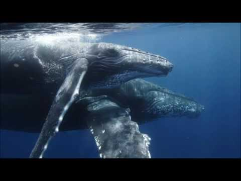 relax music for chillout and spa - whales and dolphins