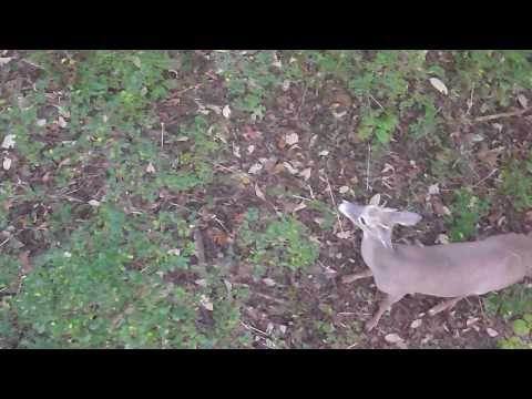 Big Tennessee Doe Down - November 1, 2013