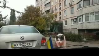 смешные котики глупые коты короткое видео