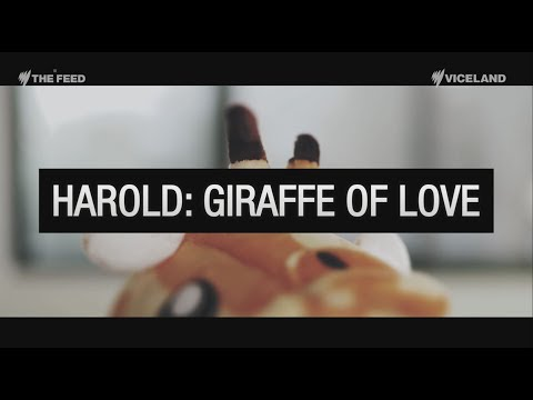 EXCLUSIVE: Harold the Giraffe speaks out - The Feed