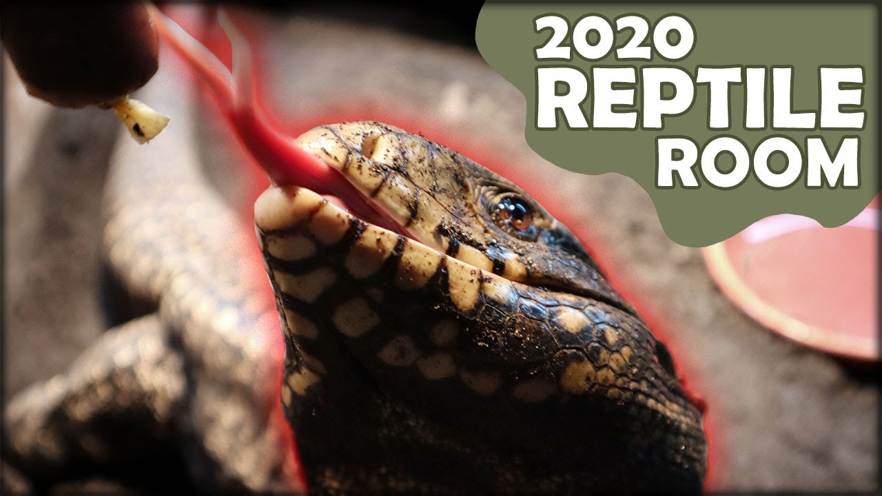 July 2020 Reptile Room Update And Tour! 5 NEW ENCLOSURES INCOMING!