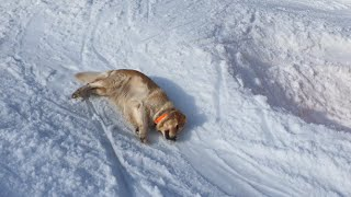 Dog Sliding Down A Snowy Hill