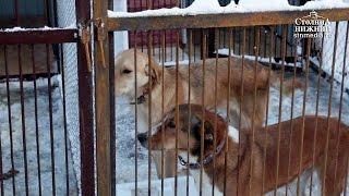 Первый приют для бездомных животных открыли в Нижнем Новгороде