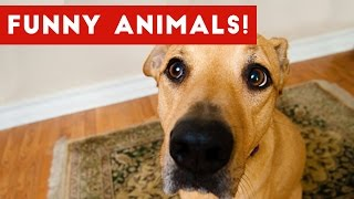 funniest pet clips bloopers moments caught on tape 2017   funny pet videos