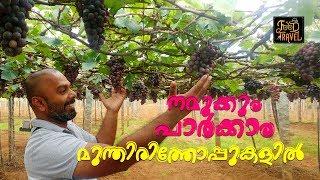 Meghamalai Road Trip & Grape Vineyards   Meghamalai மேகமலை മേഘമല   Suruli Falls சுருலி விழுகிறது