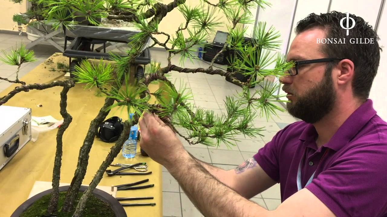 Live Demonstration By Ren At The Bonsai Triennale In Wrocaw Wiring Demo Poland