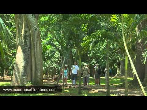 Pamplemousse Botanical Garden - Jardin de Pamplemousse (Mauritius – Ile Maurice)