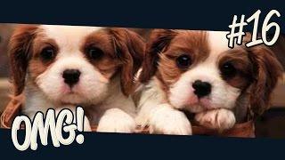 Haustiere & geplatzte Frösche | OMG #16