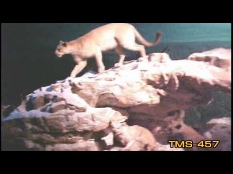 Youtube Grand Canyon Diorama