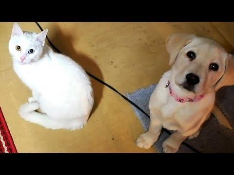 猫と子犬の熱視線 リュウくん&ロッキーちゃん