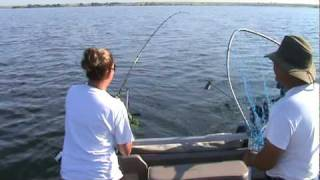 Lake Oahe Salmon caught on a downrigger