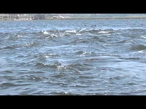 منبع النيل في اوغندا.mp4
