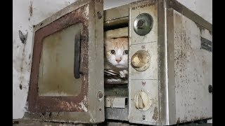 55 Cats rescued from Kondhwa, Pune after being locked in a filthy apartment for years!