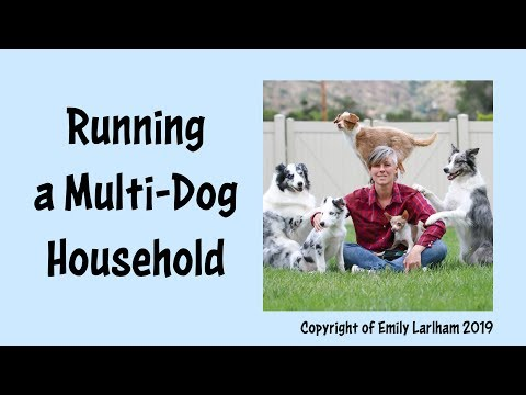 Running a Multi-dog Household - NEW video on demand!