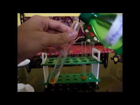 DNA Extraction from plant sources