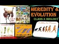 Heredity & Evolution Class 10 Biology Full Chapter