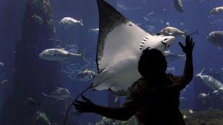 Самый большой аквариум! Dubai Atlantis the Palm(Волшебный мир моими глазами! На этом канале вы увидите разные уголки планеты, снятые мною и не только! Загад..., 2015-04-07T06:47:58.000Z)