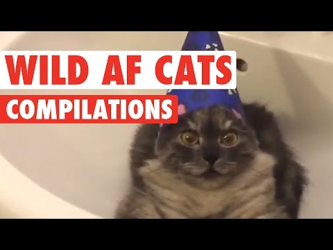 Funny Wild AF Cat Pet Video Compilation 2016