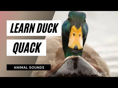 Duck Sounds - Free downloads and reviews - CNET Download.com