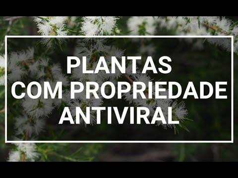 Conheça Seis Plantas Com Propriedade Antiviral