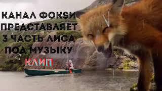Клип про лис