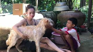 🐕 ❤️#DOGS JUST #DON'T WANT TO #BATH #amazing  #love    #Funny #dog #bathing compilation