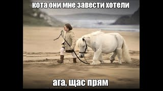 Веселые картинки. Смешные приколы про коней.