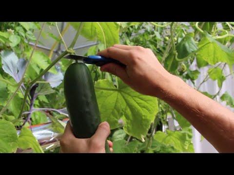 Global Food Garden