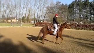Schnapi - 11th day under saddle