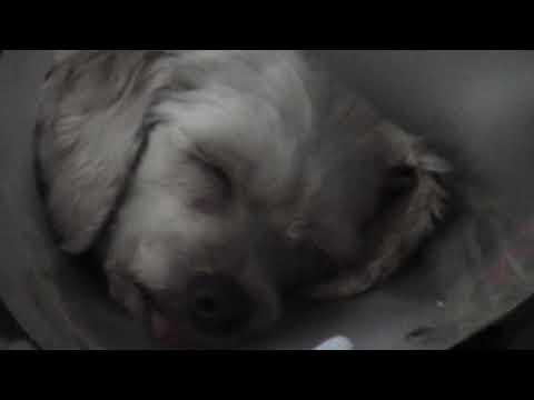 durmiendo estilo boster
